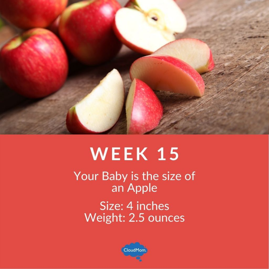 15 weeks pregnant baby size comparison with fruit - apple