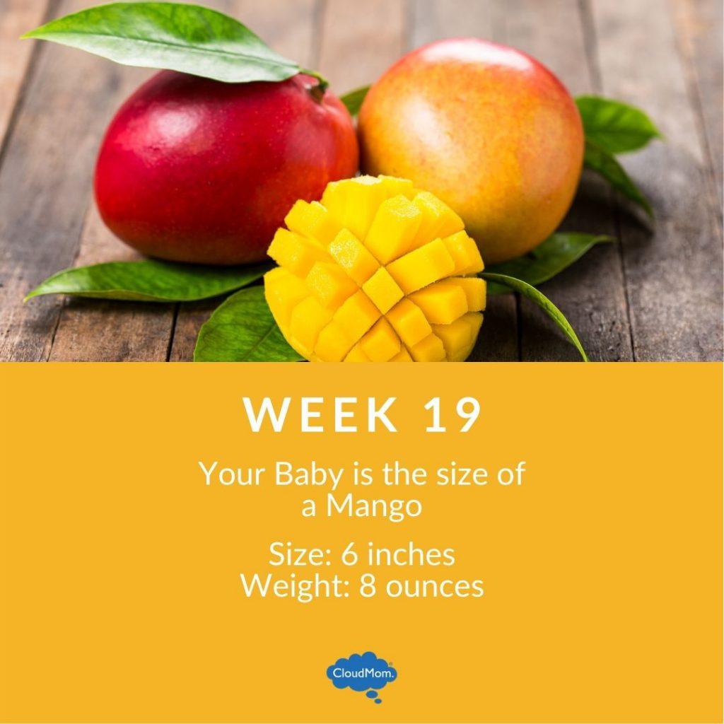 19 weeks pregnant baby fruit size - mango